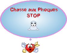 affiche chasse aux phoques stop