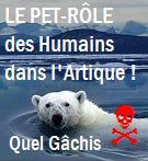 Ours polaire dit le pet -Rôle dans l'artique , quel gâchis