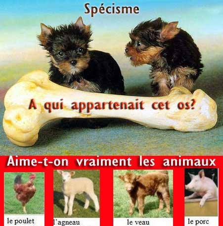 Specisme pourquoi manger des animaux