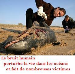 Stop aux explosions sous-marines