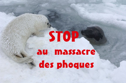 stop au massacre des phoques
