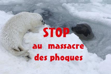 stop au massacre des phoques