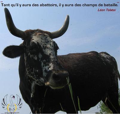 moustache la vache citation: Tant qu'il y aura des abattoirs , il y aura des champs de bataille. Léon Tolstoï