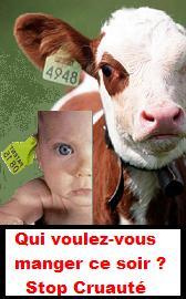 Bébé veau =Bébé humain ... stop cruauté , abus
