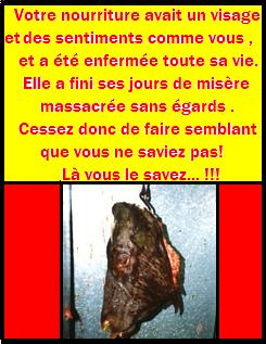 La viande a un visage 